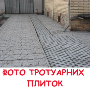 trotplutkaphot